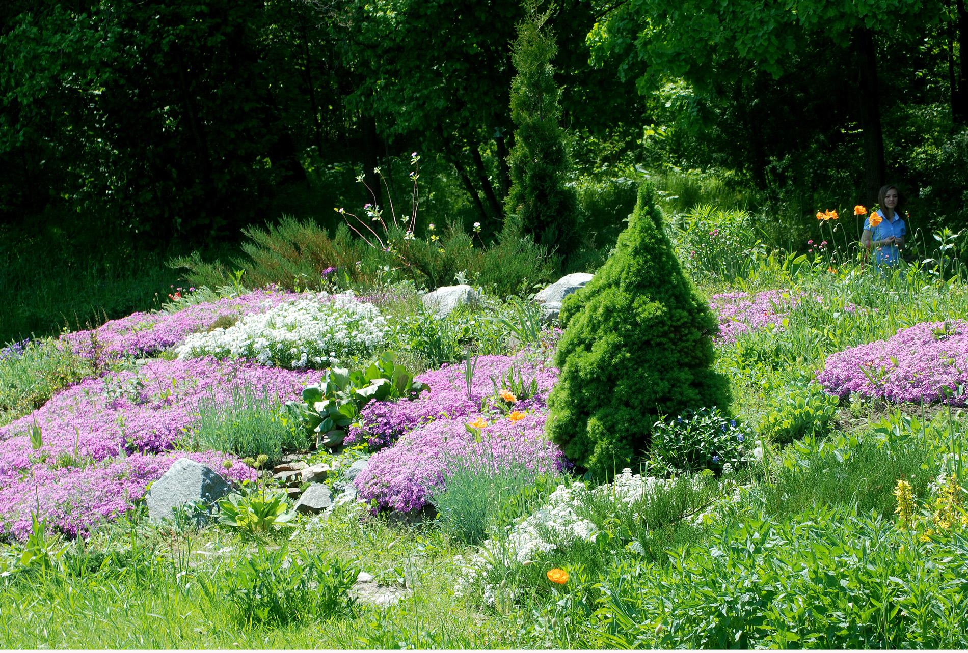 Альпійська гірка - Ботанічний сад ЖНАЕУ