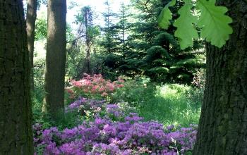 Дубові насадження - Ботанічний сад Житомирського національного агроекологічного університету