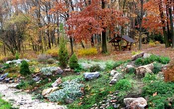 Фрагмент партерної експозиції - Ботанічний сад Житомирського національного агроекологічного університету